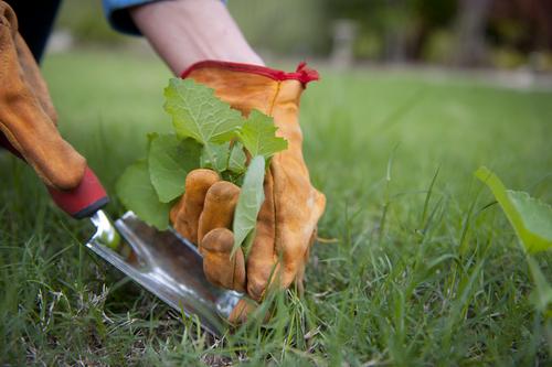5 Gardening Best Practices That Can Help You Grow Your Business Too